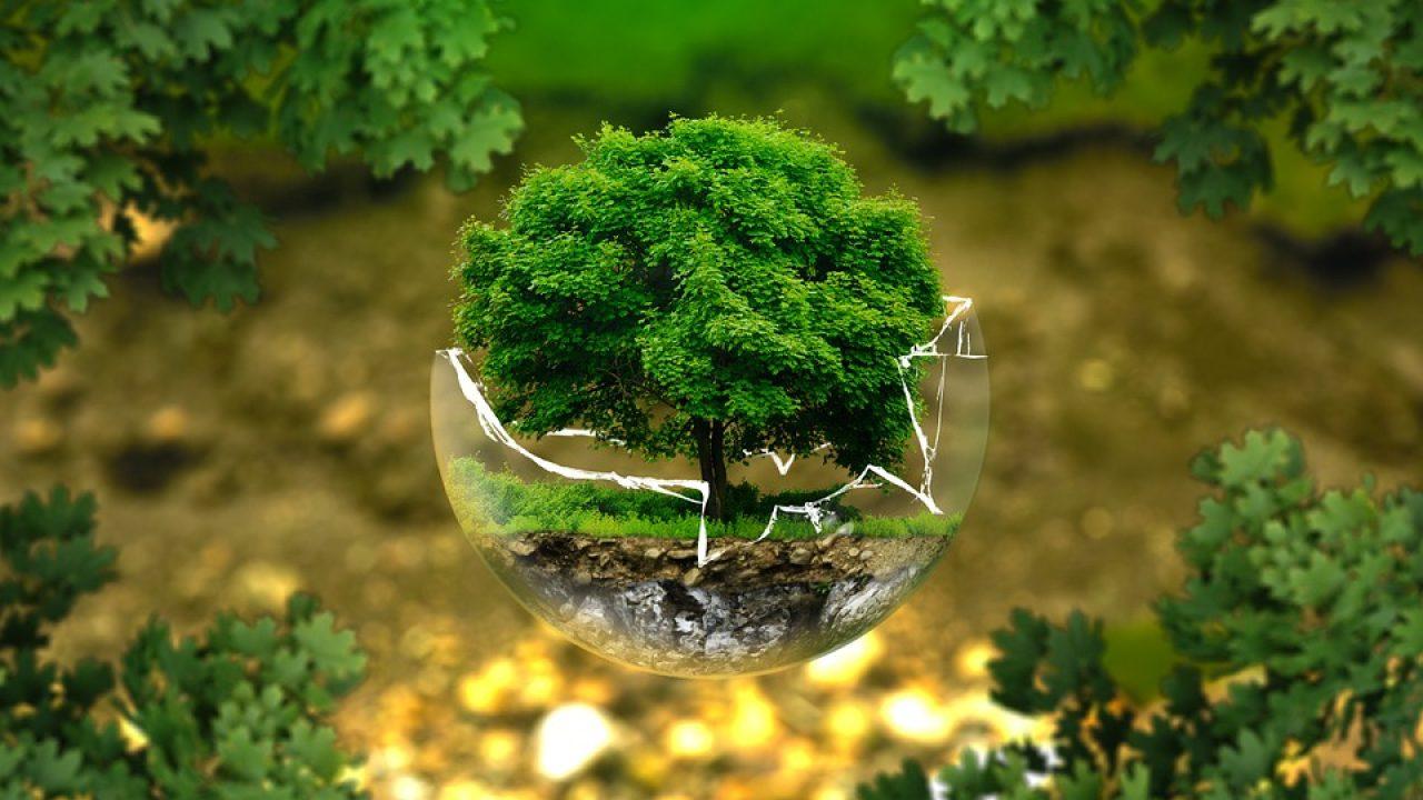 valstybės biologinės įvairovės strategija ir veiksmų planas)